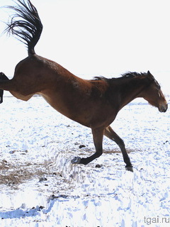 лошадей зимой