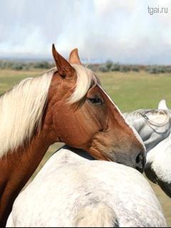 красивые лошади картинки