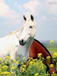 фото лошадей на природе