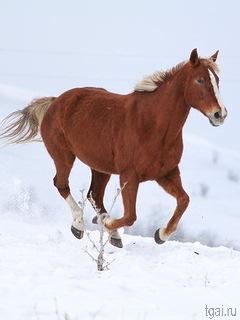 фото лошадей зимой