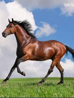 Красная лошадь