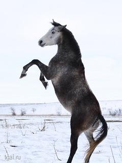 лошадь на двух ногах.