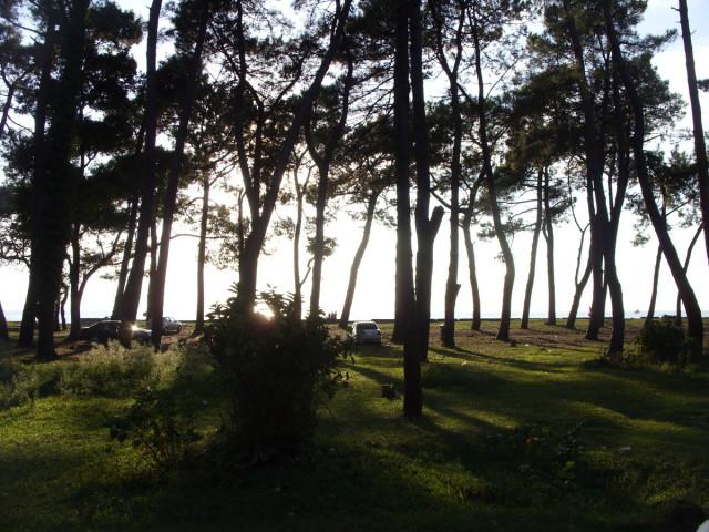 Отдых в лесу на побережье Черного моря