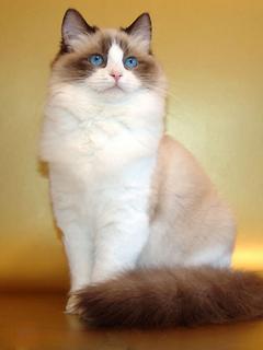 Картинки кошки на мобильный телефон