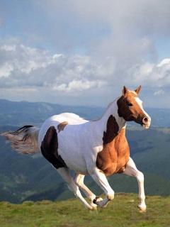 Красивые фото картинки бег лошадей на