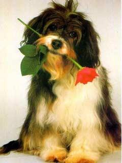 Красивые картинки собак на мобильный