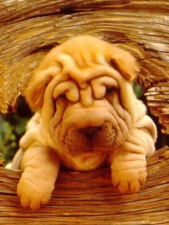Картинки собак на мобильный телефон