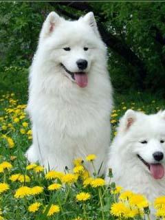 собаки картинки на телефон