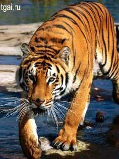 Красивые фото картинки животное