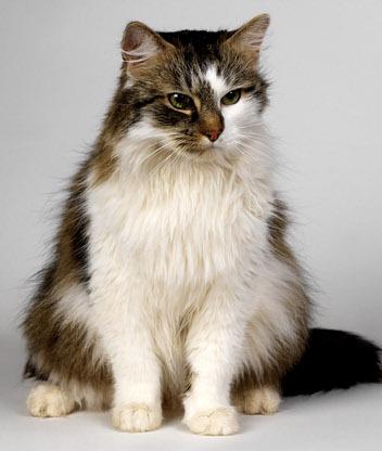 Фото картинки большие кошки фото