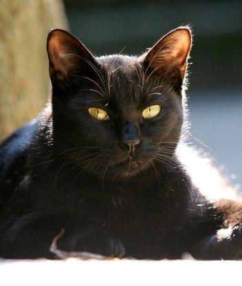 Красивые фото картинки большие кошки