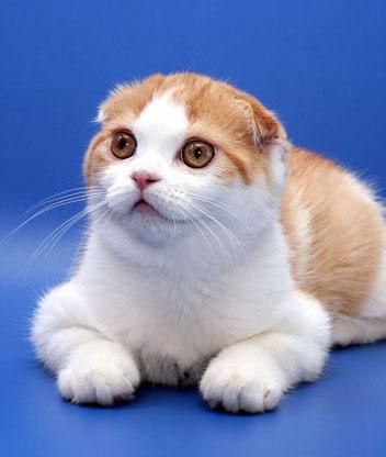 Красивые фото картинки кошек и котят