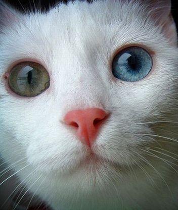 Картинки котов кошка с разным цветом