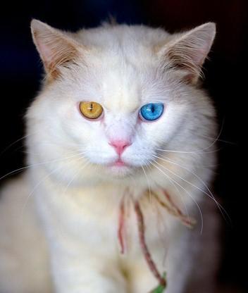 Красивые картинки кошки на мобильный