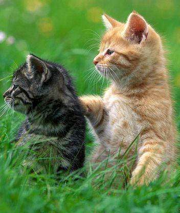 Красивые фото картинки котята фото