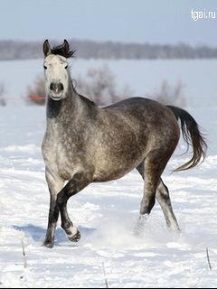 Картинки лошадей на мобильный телефон