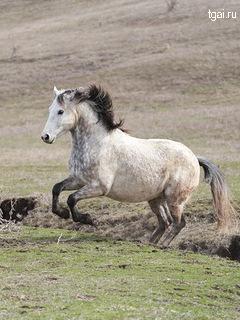Красивые фото картинки животных