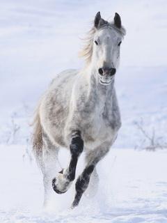 зимой картинки лошадей красивые