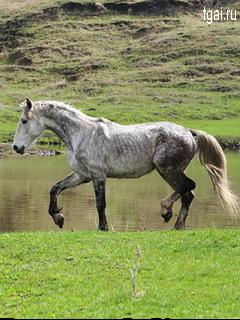 Красивые фото картинки лошадей