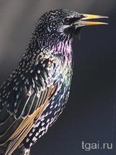 Красивые фото картинки птиц в природе