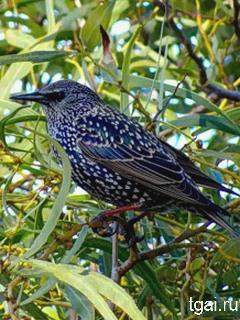Красивые картинки птиц на мобильный