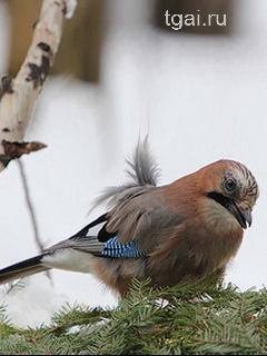 Фото картинки птиц канарейка на ветке