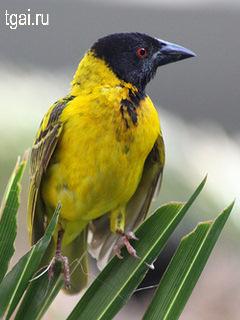 Фото картинки птиц в природе птицы на