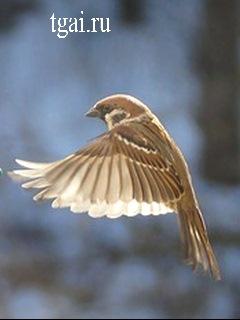 скачать бесплатно картинки на телефон голубей