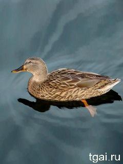 Красивые фото картинки водных птиц