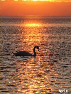 Красивая фото картинка птиц скачать