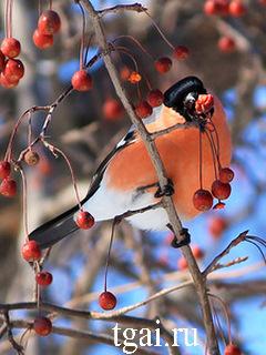 Самые красивые картинки цветные птицы